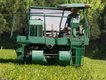 tea_plantation-640p.jpg