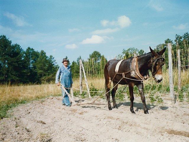 bandon mule.jpg