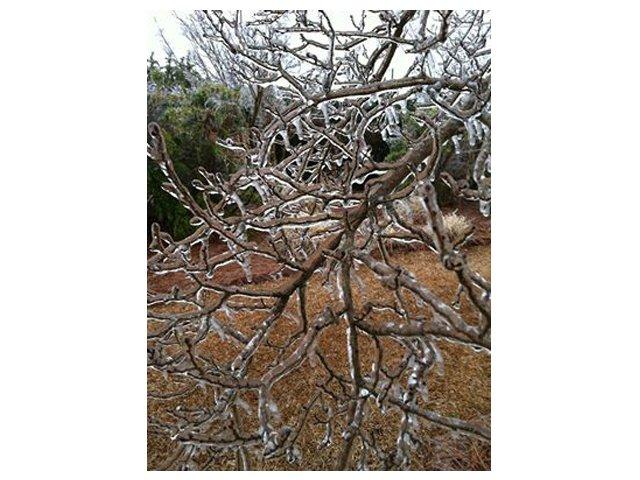 newberry-ice.jpg