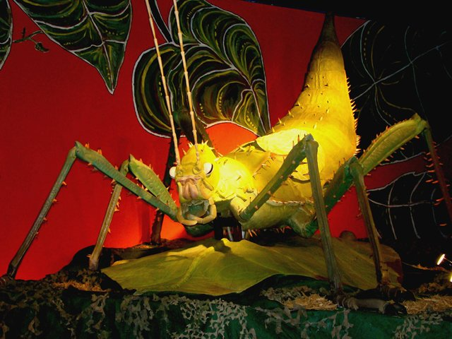 Grasshopper-Bugs.jpg