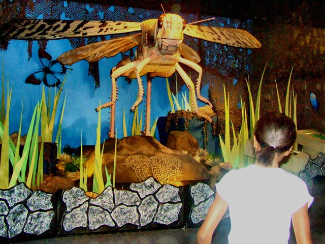 mantis-bugs.jpg