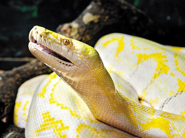 reptile_640p.jpg