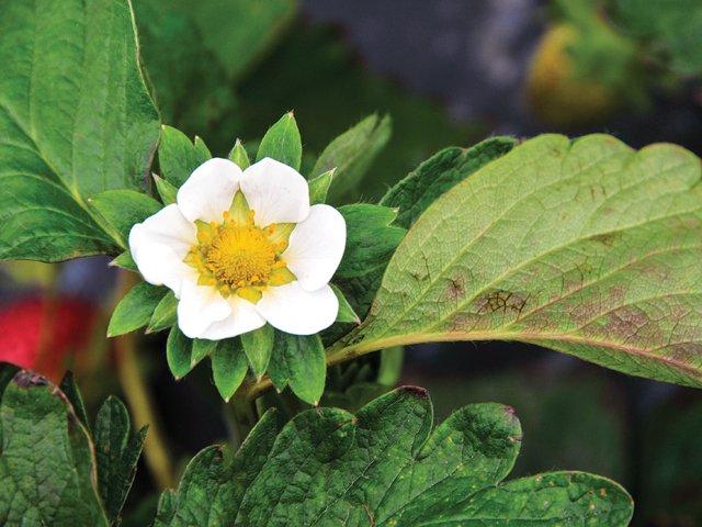 Gardener_SBflowers.jpg