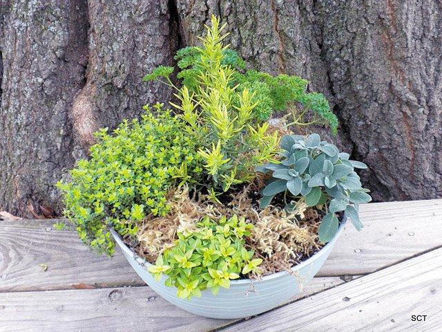 herbs_640p.jpg