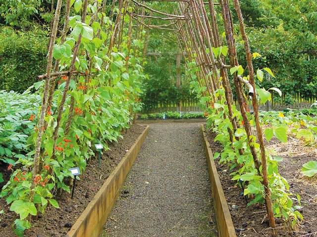 Tips On Trellises Raised Beds Www Scliving Coop