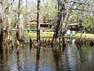 treehouse_shore.jpg