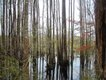 treehouse_swamp.jpg