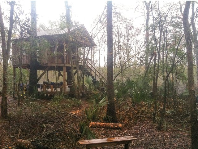 treehouse_treehouse2.jpg