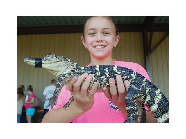 alligator.jpg