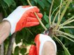 crape-myrtle-pruning-sprouts.jpg