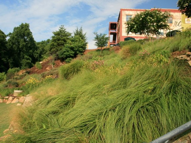 Falls-Park-ornamental-grasses.jpg