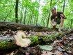 Tradd-Cotter-Mushroom-Mountain-2.jpg
