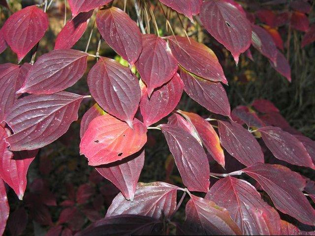 c-florida-fall-color_700.jpg