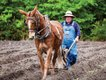 Horry-County-Living-Farm-Wayne-Skipper.jpg