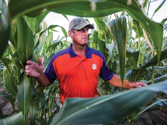 Restoring superstar crops