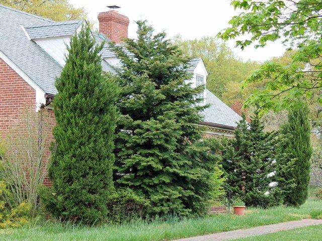 Overgrown housefront