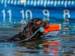 black-dog-orange-toy.png