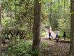 sc-botanical-garden-mountain-trail.jpg