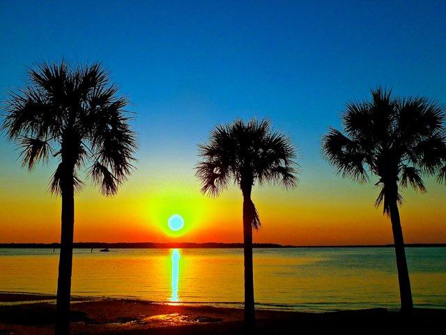 palmetto_trees2_640p.jpg