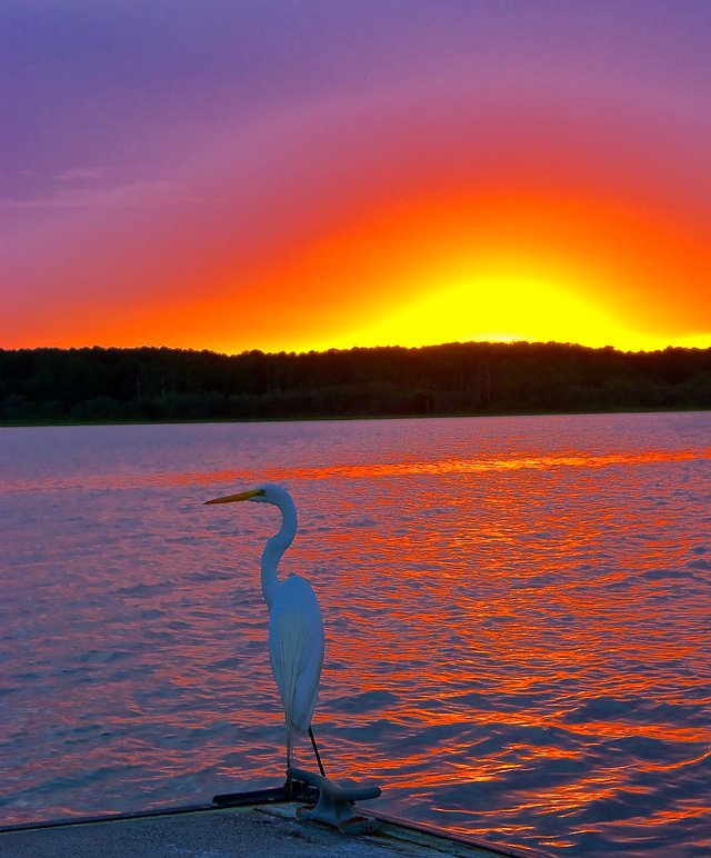 sunset_egret_640p.jpg