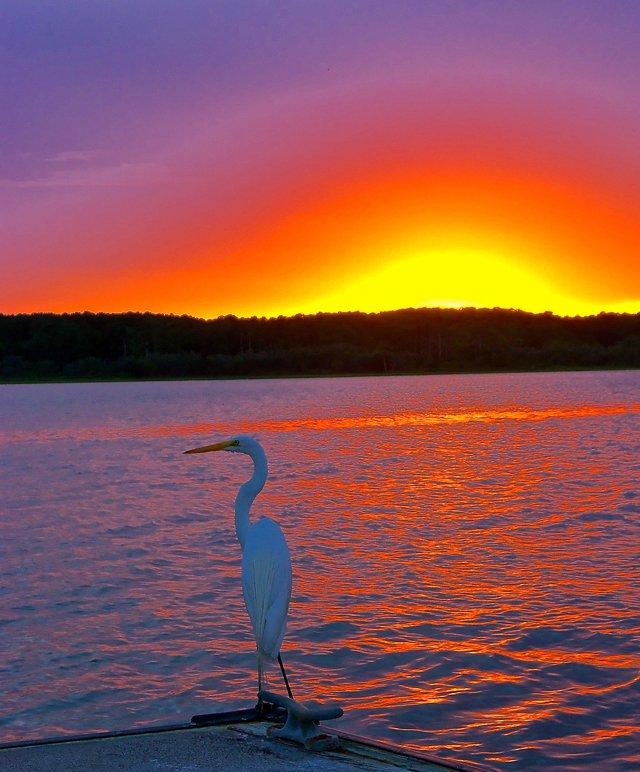 sunset_egret_640p.jpg