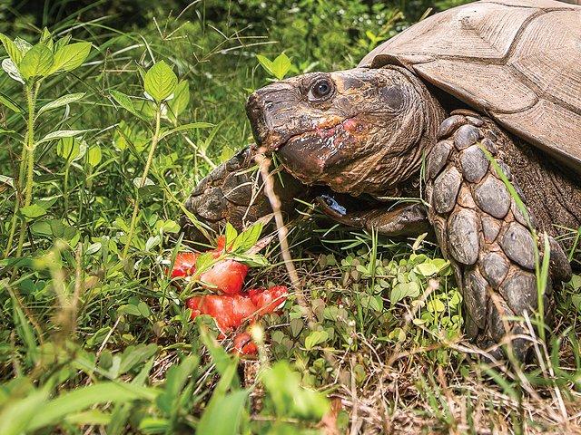Turtle_Teaser.jpg