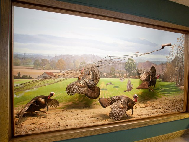 national-wild-turkey-federation-winchester-museum.png