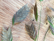 river-oats-seeds.png