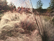 frosty-sweetgrass2.png