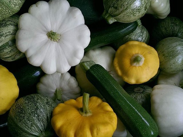 mixed-squash_credit-nikki-seibert.png