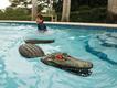 pool-gator.png