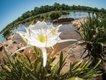 landsford-canal-lilies.jpg