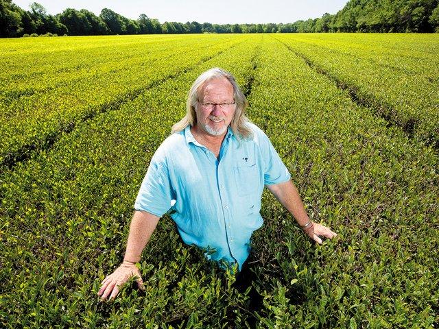 charleston-tea-plantation-wadmalaw.jpg