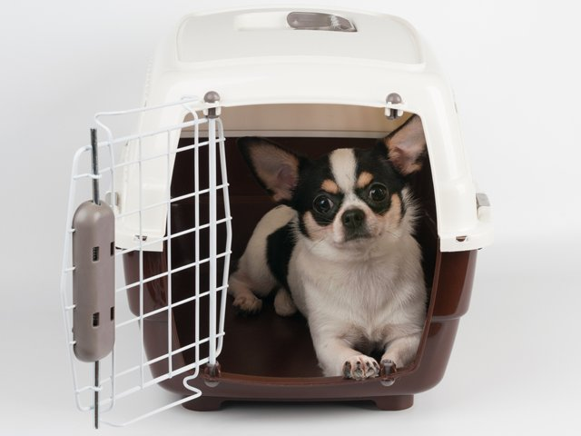 Dog in crate.png