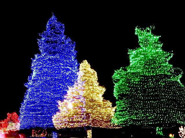 TREES_FULL.SumterFantasyofLights.jpeg