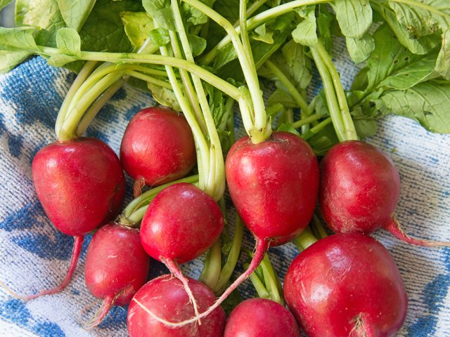 radishes-sized-for-web.png