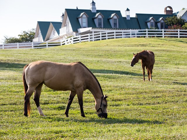 Red-Horse-Inn-Pasture-View-2.png