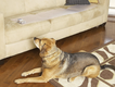 PetSafe ScatMat Electronic Pet Training Mat-Sofa.png