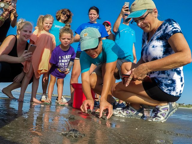 Saving-sea-turtles-Island-Turtle-Team-red-bucket.png