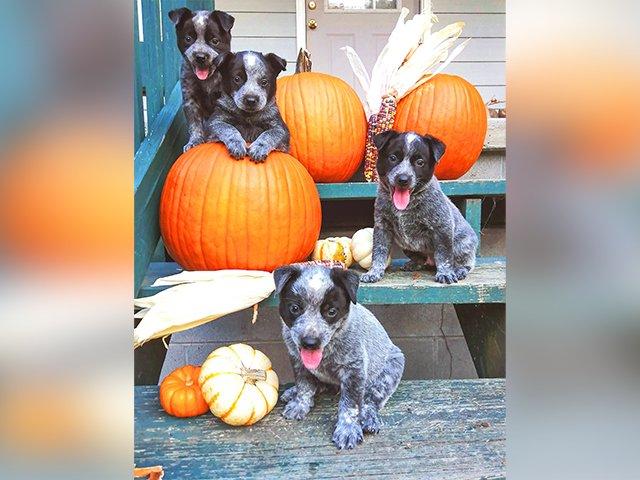 Pets-Addie-Blu-pups-Lydia-Sellman (2).png