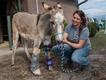 Equine-Rescue-Aiken-Stephanie-Mule-Caitlin-Brady-Credit-TIm-Hanson.png