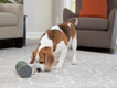 PetSafe Kibble Chase Roaming Treat Dropper.png