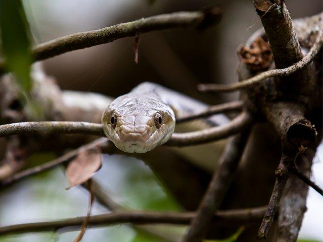 Snakes-Alive-Edisto-Serpentarium.png