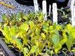 Garden-Lettuce-Transplant.jpg