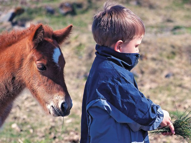 boy_and_foal_640p.jpg